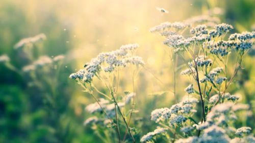 Sanfte Hilfe für die Seele: Psychopharmaka aus der Natur