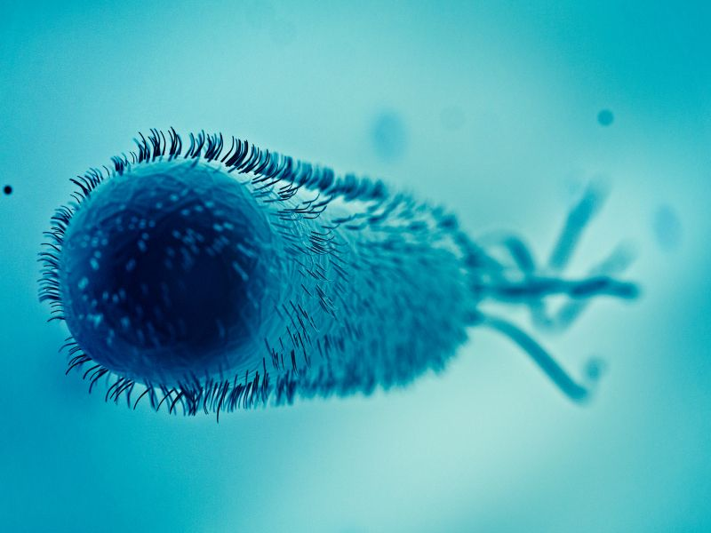 E.Coli Bakterien