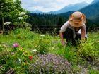 Heimische Heilpflanzen gegen Wechseljahresbeschwerden