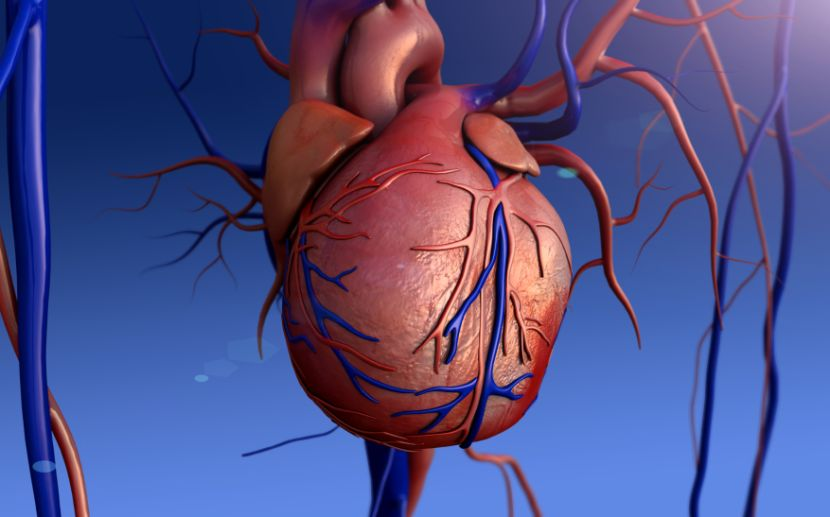 Herzrasen • Woher kommt es, wie wird behandelt?