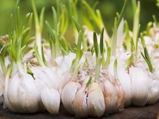 Präbiotika: Diese 13 Lebensmittel schmecken unseren Darmbakterien