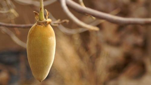 Von Açai-Beere bis Yakon: Wie gesund ist Superfood?