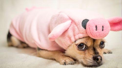 Mehr Sport: Neun Experten-Tipps gegen den inneren Schweinehund