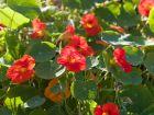 Heilkräuter aus Küche und Garten