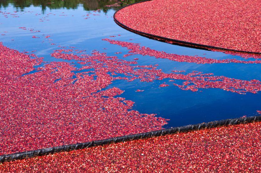 cranberry gesundes fr chtchen plus rezepte. Black Bedroom Furniture Sets. Home Design Ideas