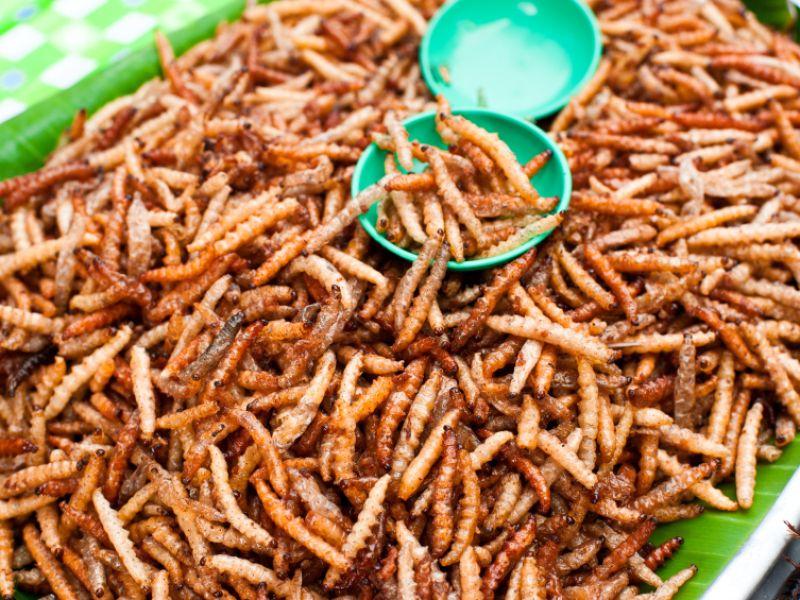 Mehlwürmer zum Essen