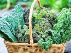 Trendgemüse Kale: Grünkohl, nur cooler