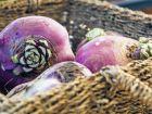Steckrüben: Kalorienarme Kolosse