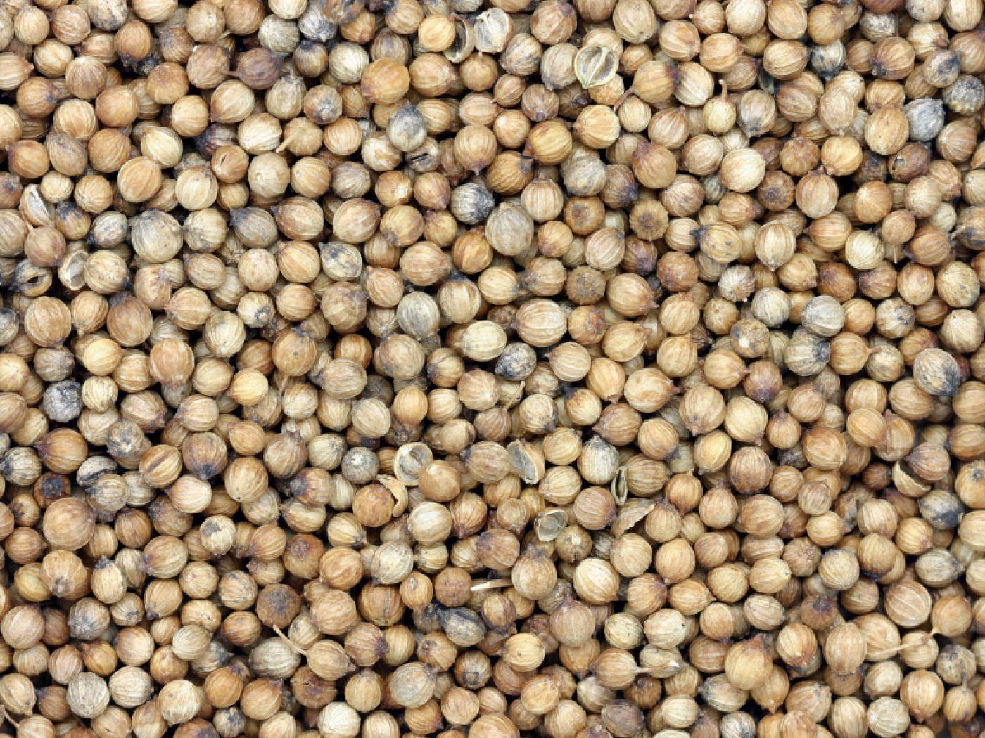 Super Koriander • Wirkung von Grün & Samen | plus Rezepte! @II_23