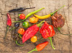 Chili gegen Schmerzen und Übergewicht