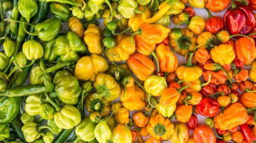 paprika so gesund sind die bunten schoten plus rezepte. Black Bedroom Furniture Sets. Home Design Ideas