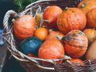 Kürbis: Gesunder Herbst-Koloss