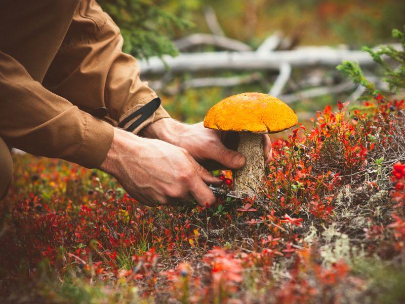 Pilze sammeln will gelernt sein