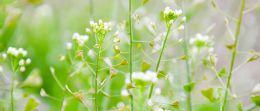 Nasenbluten: Die besten Hausmittel aus der Natur