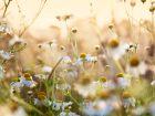 Erkältung? Diese 17 Heilpflanzen bringen Besserung