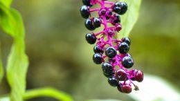 Homöopathie: Wichtige Arzneimittel und ihre Wirkung