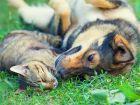 Globuli für Hund und Katze: Homöopathie bei Tieren