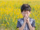 Homöopathie im Kampf gegen Allergien