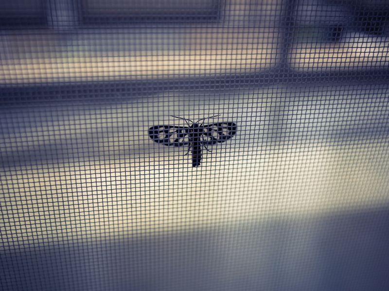 Fenster mückensicher machen