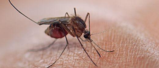 Malaria-Neue-Studie-macht-Hoffnung