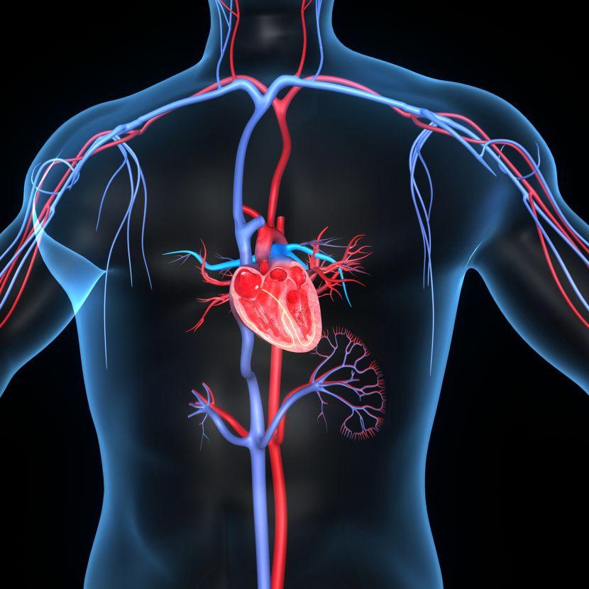 Herz-Kreislauf-Erkrankungen • Medikamente und Wirkstoffe