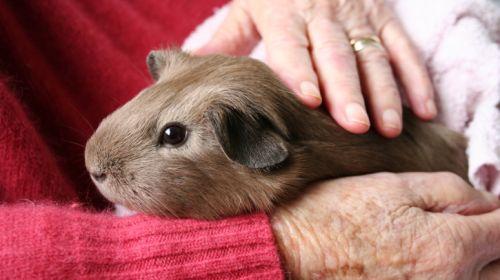 Was ein Haustier Ihrer Gesundheit bringt