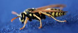 Die besten Tipps gegen Wespenstiche