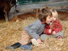 UG| Warum Bauernhof-Staub vor Allergie schützt