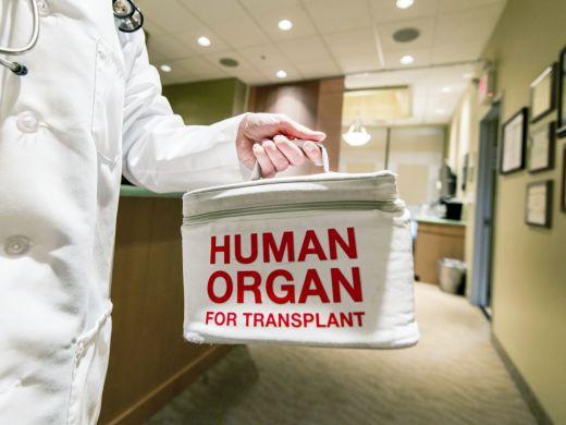 Organtransplantation: Voraussetzungen und Ablauf