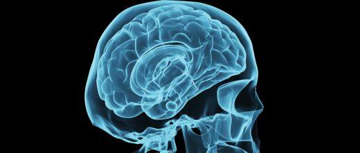 Gehirn Illustration