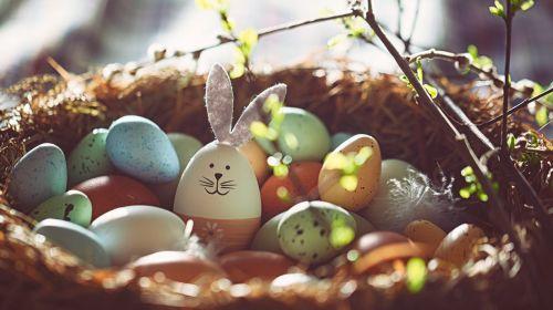 21 verblüffende Fakten über (Oster-)Eier