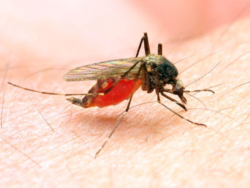 Malaria – (sub-)tropische Gebiete, vor allem Afrika, Asien, Südamerika