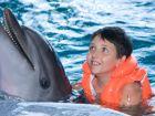 So helfen Delphine Behinderten