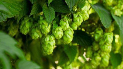 Die größten Bier-Mythen