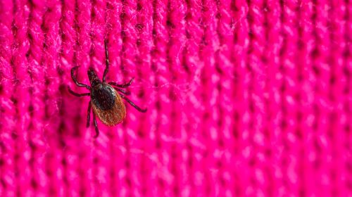 Ticks: the most important facts!